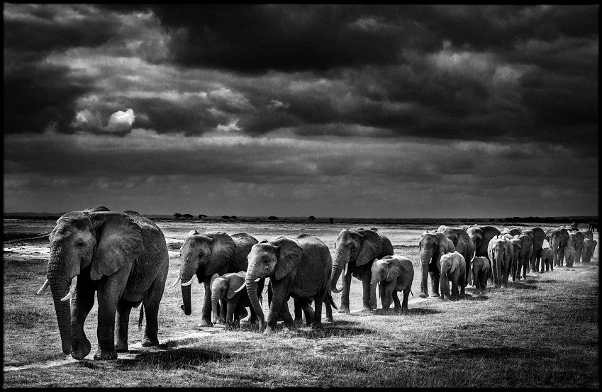 photo-crossing-the-plain-i-laurent-baheux